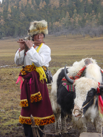 Tibetan Hersman